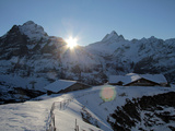 Sunrise on the Wetterhorn  Seen from First  Grindelwald  Bernese Oberland  Swiss Alps  Switzerland 