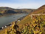Lorchhausen  Rhine Valley  Hesse  Germany  Europe