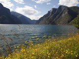 Aurlandsfjorden Near Aurlandsvangen  Sogn Og Fjordane  Norway  Scandinavia  Europe