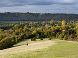 Autumn View North Along the Burford Spur of Box Hill  Surrey Hills  North Downs  Dorking  Surrey  E