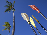 Palms and Paddles  Bavaro Beach  Punta Cana  Dominican Republic  West Indies  Caribbean  Central Am