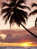 Tropical Sunset  Bridgetown  Barbados  West Indies  Caribbean  Central America