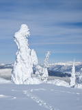 Hoar Frost Snow-Covered Trees on Two Top Mountain  West Yellowstone  Montana  United States of Amer