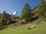Zermatt  Valais  Swiss Alps  Switzerland  Europe