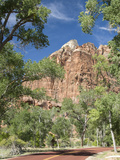 Zion Canyon Scenic Drive  Near Zion Lodge  Zion National Park  Utah  United States of America  Nort