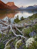 Dusty Star Mountain  St Mary Lake  and Wildflowers at Dawn  Glacier National Park  Montana  United