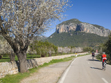 Cyclists on Country Road  Alaro  Mallorca  Balearic Islands  Spain  Europe