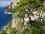 Cliffs Near Capri Town  Capri Island  Bay of Naples  Campania  Italy  Europe
