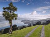 Otago Harbour  Otago Peninsula  Otago  South Island  New Zealand  Pacific