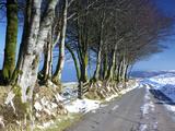 Beech Trees in Snow Above Porlock  Exmoor National Park  Somerset  England  United Kingdom  Europe
