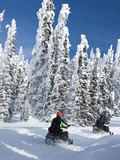 Snowmobilers Riding Through a Forest of Hoar Frosted Trees on Two Top Mountain  West Yellowstone  M