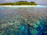 Coral Plates  Lagoon and Tropical Island  Maldives  Indian Ocean  Asia