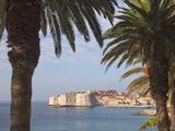 Old Town Through Palm Trees  Dubrovnik  Croatia  Europe
