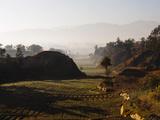 Farm Land Kathmandu Valley  Bagmati  Nepal  Asia