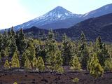 Las Canadas  Parque Nacional Del Teide  UNESCO World Heritage Site  Tenerife  Canary Islands  Spain