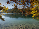 Autumn Colours at Alpine Alpsee Lake  Schwangau  Bavaria  Germany  Europe