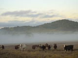 Farmland on Foggy Morning  Atherton Tableland  Queensland  Australia  Pacific