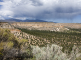 Landscape Near Los Alamos  New Mexico  United States of America  North America