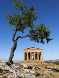Tempio Di Concordia (Concord) and Almond Tree  Valle Dei Templi  UNESCO World Heritage Site  Agrige