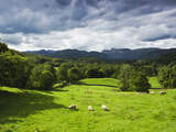 Veiw of Lingmoor Fell  Cumbria  England  United Kingdom  Europe