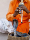 Cobra Snake Charmer Outside the City Palace  Jaipur  Rajasthan  India  Asia
