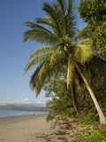 Four Mile Beach with Coconut Palm Trees  Port Douglas  Queensland  Australia  Pacific