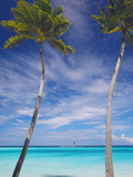 Palm Trees on Tropical Beach  Maldives  Indian Ocean  Asia