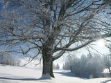 Winter Landscape at Thurner  Black Forest  Baden-Wurttemberg  Germany  Europe