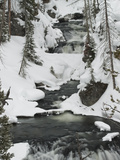 Snowy Stream in Yellowstone National Park  UNESCO World Heritage Site  Wyoming  United States of Am