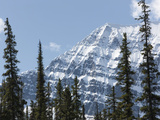 Trees in Front of Mount Edith Cavell  Jasper National Park  UNESCO World Heritage Site  British Col