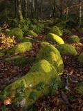 Mossy Boulders  Dartmoor National Park  Devon  England  United Kingdom  Europe