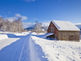 Snow Covered Road  Barn and Chalets in Norwegian Village of Laukslett  Troms  North Norway  Scandin