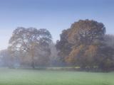 Misty Trees  Exe Valley  Devon  England  United Kingdom  Europe