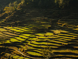 Terraced Rice Fields  Near Pokhara  Gandak  Nepal  Asia