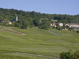 Champagne Vineyards  Hautvillers  Marne Valley  France  Europe