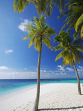 Palm Trees on Beach  Maldives  Indian Ocean  Asia