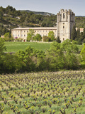 View of the Abbey of Sainte-Marie D'Orbieu  Lagrasse  across Vineyards in Languedoc-Roussillon  Fra