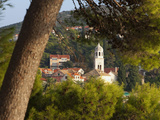 Cavtat Town Through Trees  Cavtat  Dalmatia  Croatia  Europe