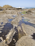 Curio Bay Fossilised Forest  Southland  South Island  New Zealand  Pacific