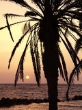 Sunrise Near Sidi Slim  Island of Jerba  Tunisia  North Africa  Africa