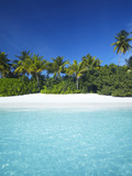 Tropical Beach  Maldives  Indian Ocean  Asia