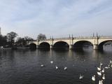 Kingston Bridge Spans the River Thames at Kingston-Upon-Thames  a Suburb of London  England  United