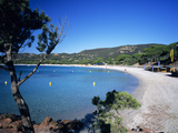 Palombaggia Beach  Near Porto Vecchio  South East Corsica  Corsica  France  Mediterranean  Europe
