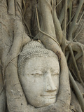Buddha Head  Wat Mahathat  Ayutthaya  UNESCO World Heritage Site  Thailand  Southeast Asia  Asia