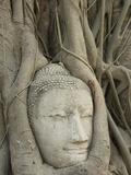 Buddha Head  Wat Mahathat  Ayutthaya  UNESCO World Heritage Site  Thailand  Southeast Asia  Asia