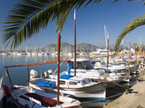 Traditional Boats Moored in the Harbour  Port D'Alcudia  Mallorca  Balearic Islands  Spain  Mediter