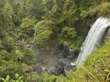Zillie Falls  Atherton Tableland  Queensland  Australia  Pacific