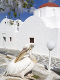 White Pelican in Mykonos Town  Island of Mykonos  Cyclades  Greek Islands  Greece  Europe