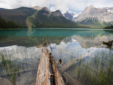 Fallen Tree Trunks  Emerald Lake  Yoho National Park  UNESCO World Heritage Site  British Columbia