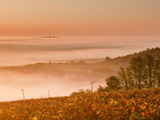 The Vineyards of Sancerre During a Heavy Autumn Mist  Cher  Centre  France  Europe